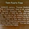 Tom Fool\'s Tree